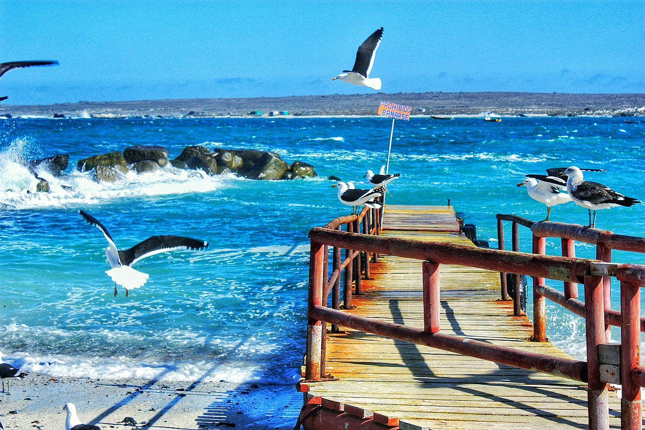 011 Caleta_de_Punta_de_Choros,_Coquimbo._Chile