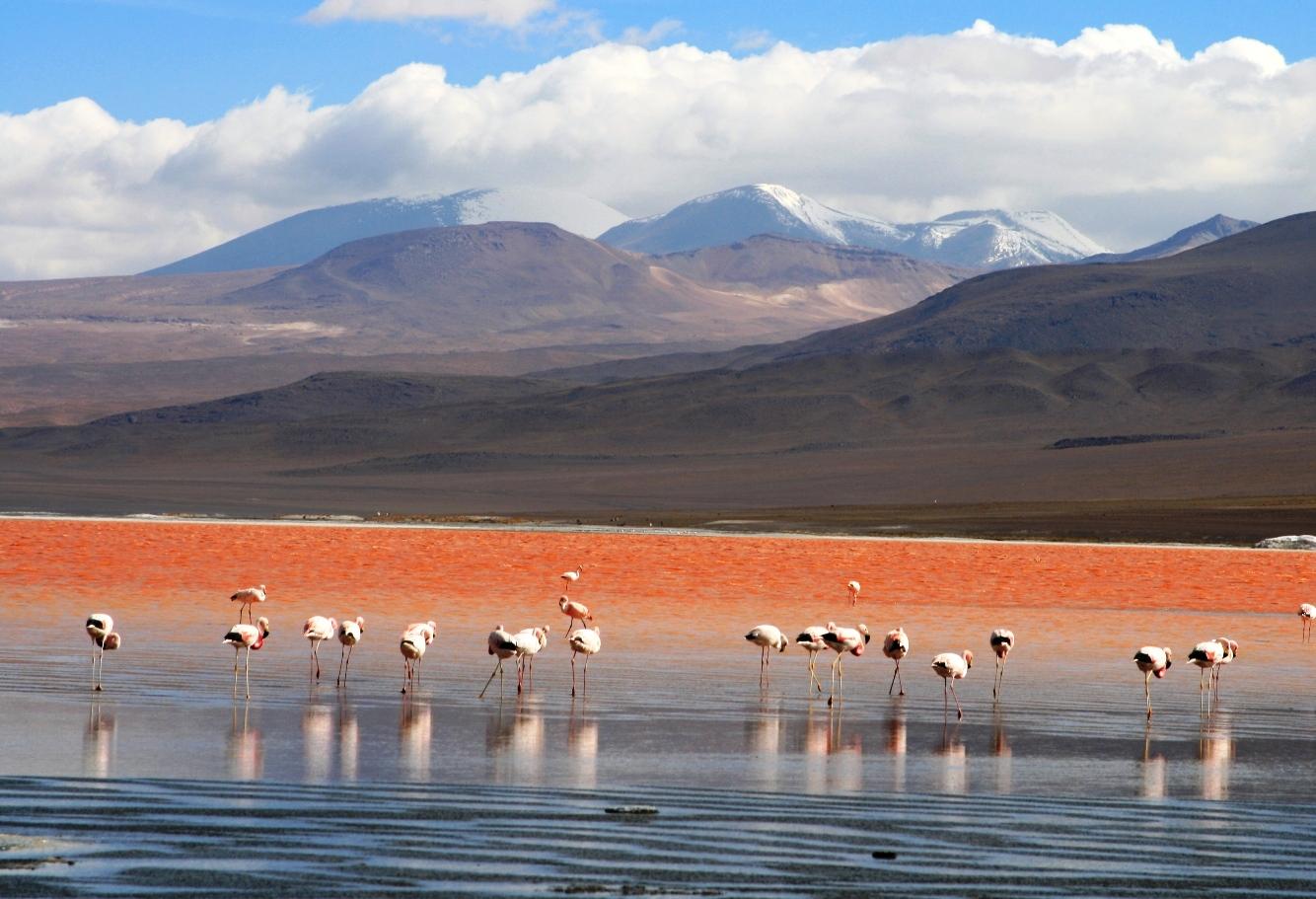 019 Flamingos_en_la_Laguna_Colorada,_Uyuni,_Bolivia