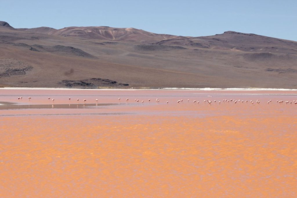 resized_laguna-colorada3